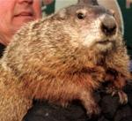Effing groundhog